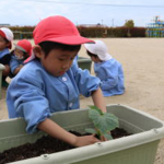 夏野菜の苗植え
